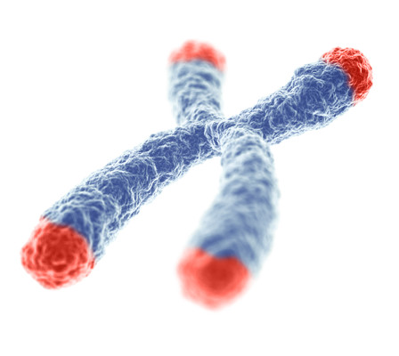 Chromosome-with-telomere-highlight